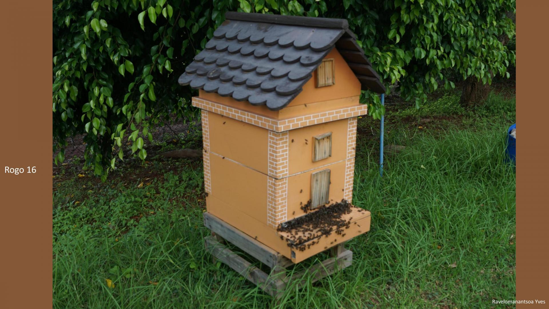 Les ruches de Manda Vokatra